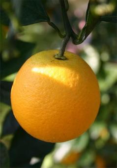 orange071008-h340.jpg
