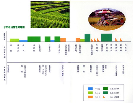 riceplantmanagement.jpg