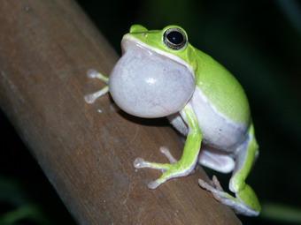 zltreefrog-1.jpg