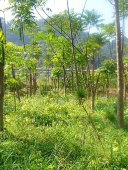 p1040156toona-garden.jpg