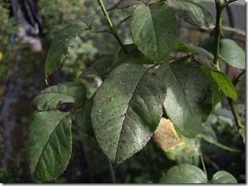 leaveswithbugs3