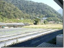 rose-farm