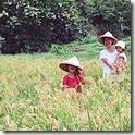 20080523-204709-ricefarm_s