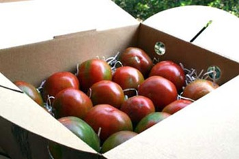 980313-tomatohope22-360