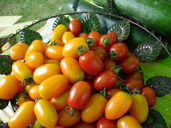 珍珍的黃金、珍蜜小番茄