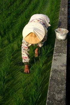 t980420-ricegrandma-400t