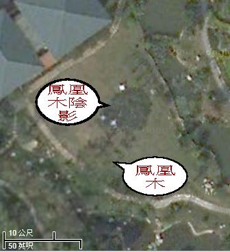 寶雲別苑草原鳳凰木說明